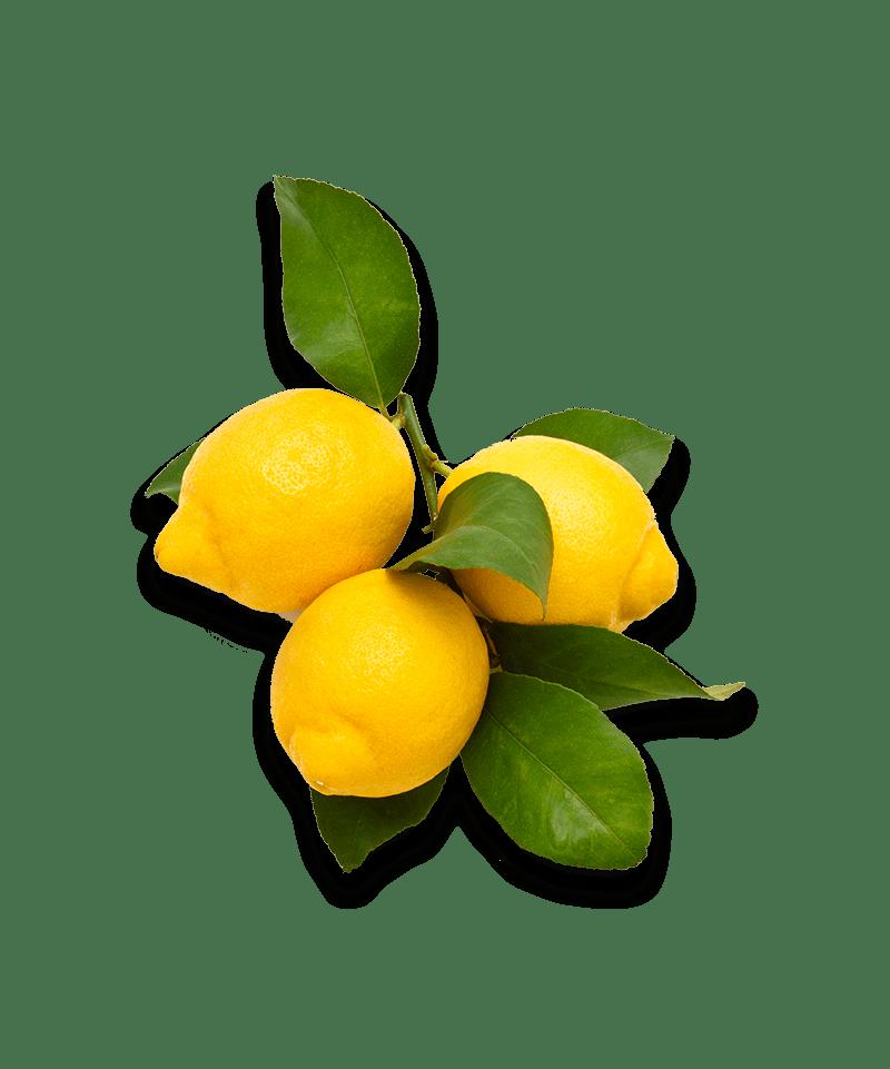 Citron med blade